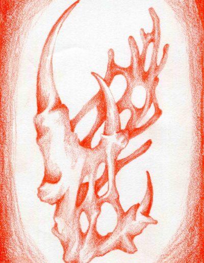 organic form: seaweed claw