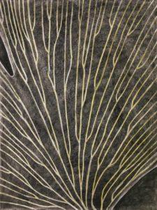 dichotomous-venation-vein-patterns-in-leaves-lurm