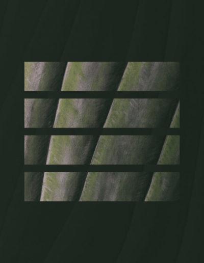 parallel venation design